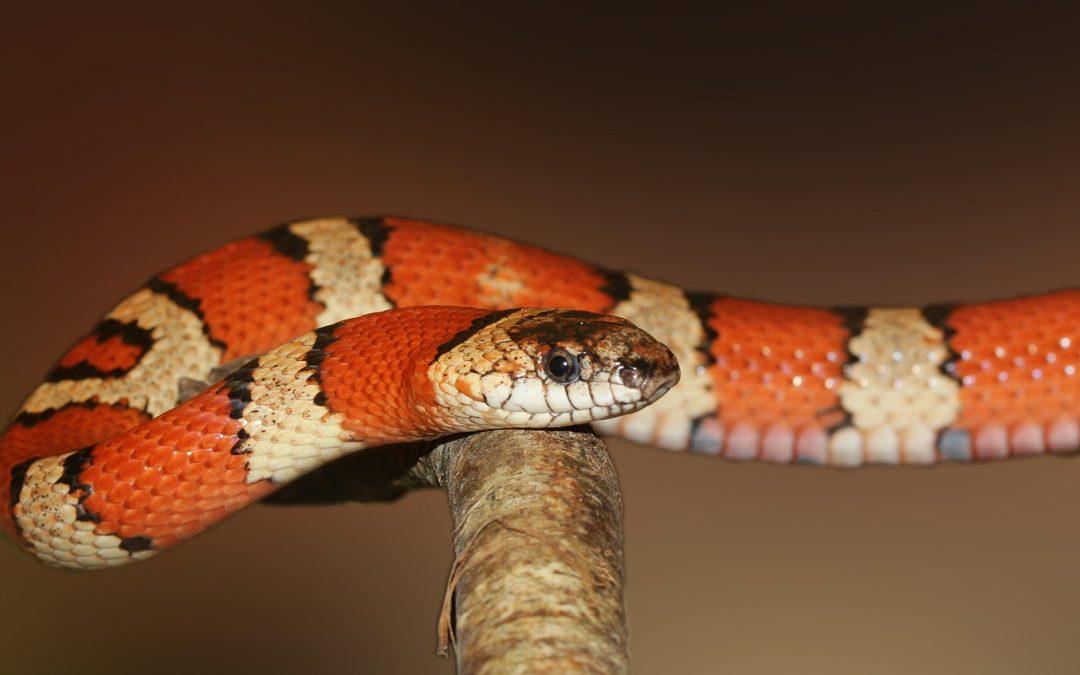De internationale dag van de slang.